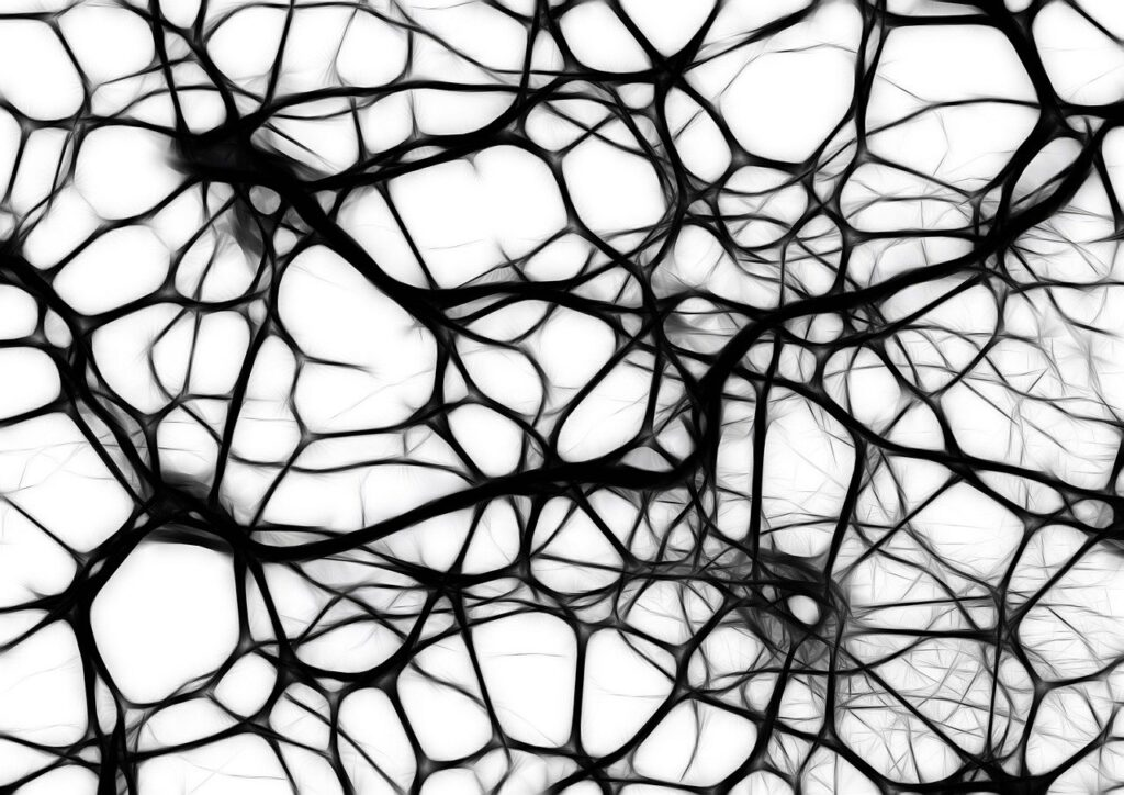 neurons, brain cells, brain structure